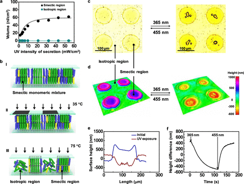 Localized liquid secretion from a photopatterned liquid-crystal polymer skin